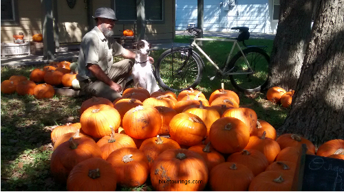 Picture of bike commuter with halloween pumpkins and bike for commuting