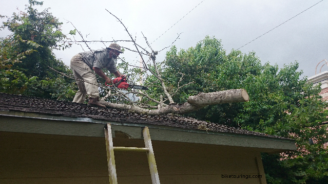 Picture of cutting dead tree on roof with chainsaw