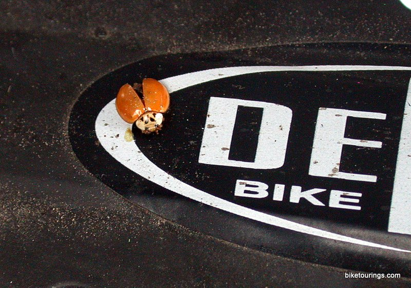 Picture of lady bug on bike rack