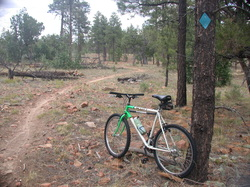 Picture of mountain bike trails at tall timbers park, overgaard, az