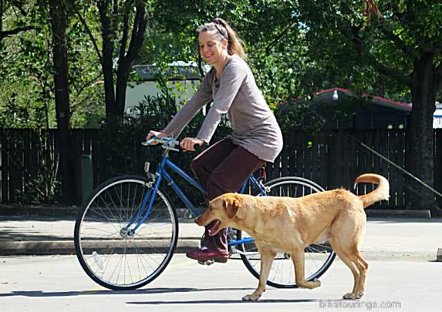 Picture of woman riding bicycle for commuting with dog following